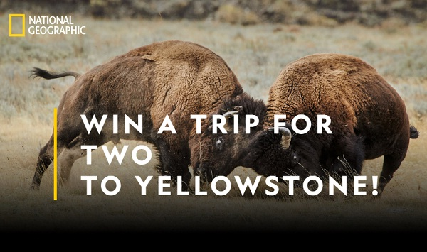 National Geographic Yellowstone Live Sweepstakes on Yellowstonelivesweepstakes.com