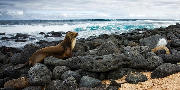 Go Places Galapagos Islands Sweepstakes: Win Trip