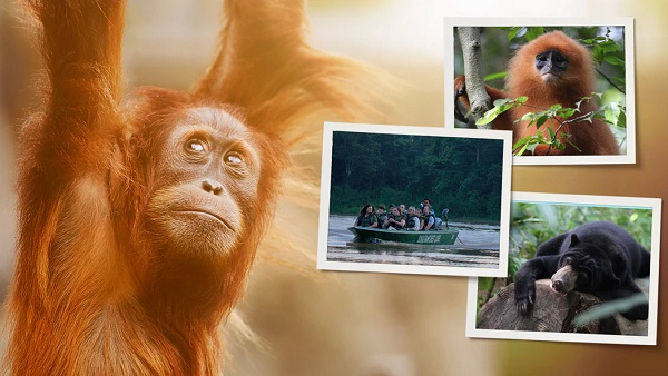 Omaze.com National Geographic Borneo Sweepstakes
